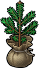 Christmas Tree Seedling icon